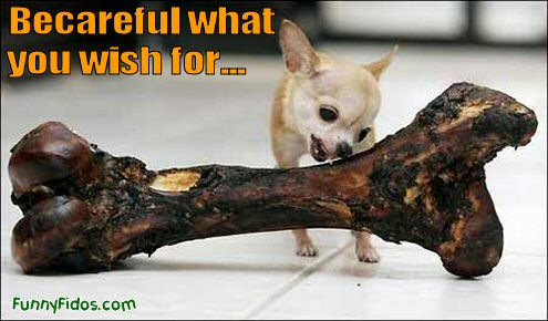 funny-dog-picture-careful-what-you-wish-for